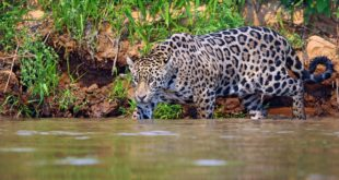 Pantanal Nationalpark